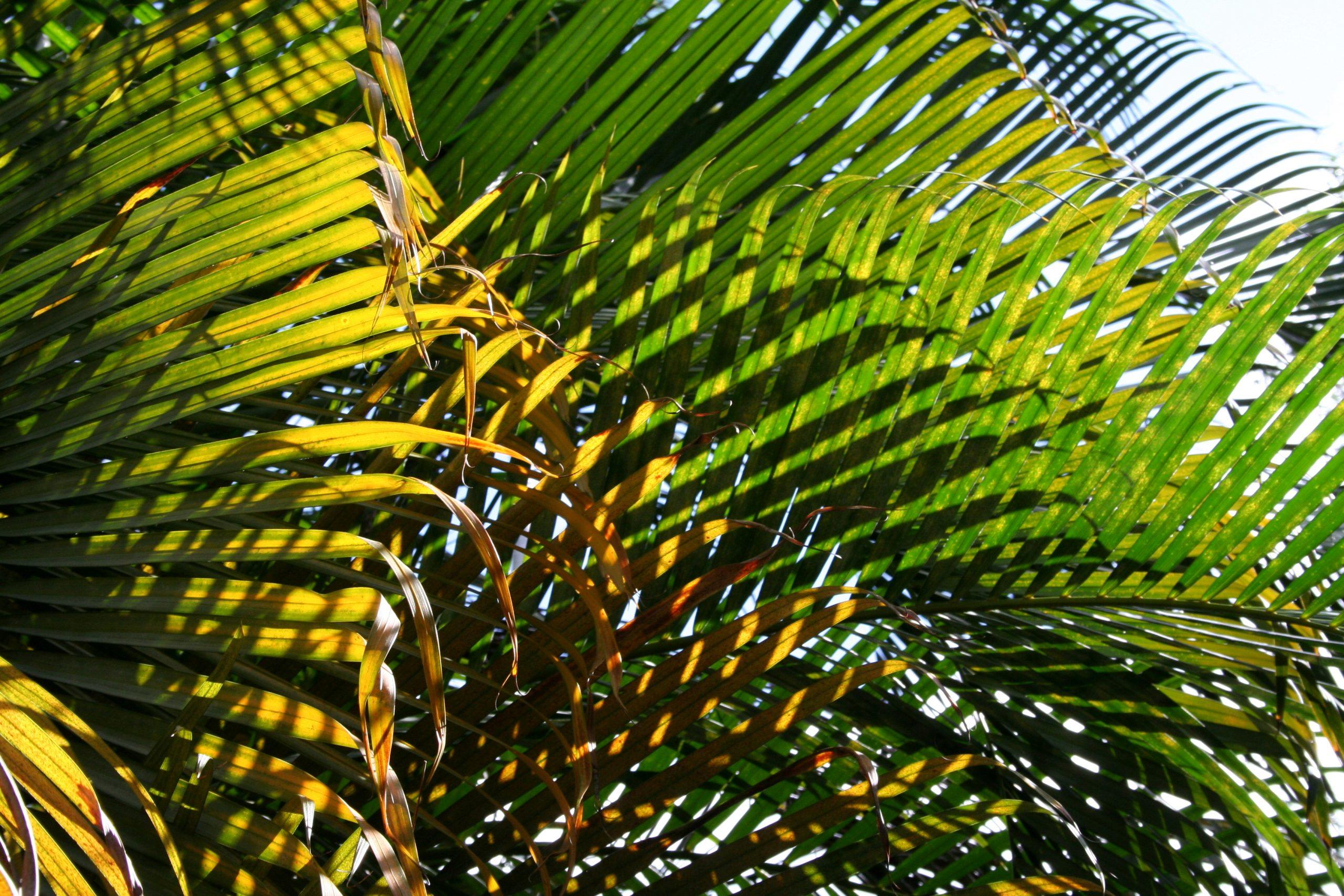 2008, Honolulu, Hawaii