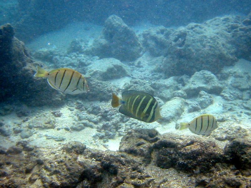 2008, Hanauma Bay, Hawaii